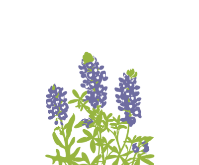 Texas Bluebonnet Illustration